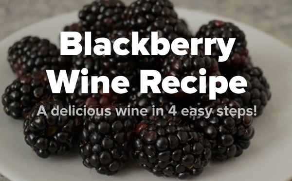 Blackberry Wine Recipe