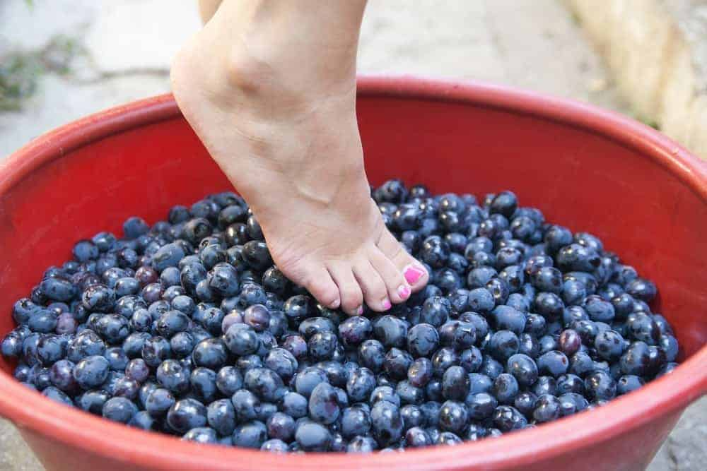 Female feet crushing grapes to make wine