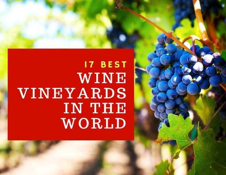 17 Best Wine Vineyards In The World