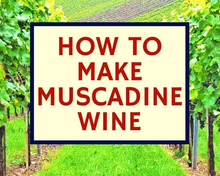 How To Make Muscadine Wine