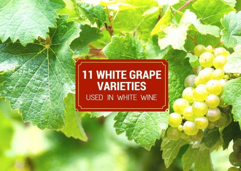 11 White Grape Varieties Used In White Wine