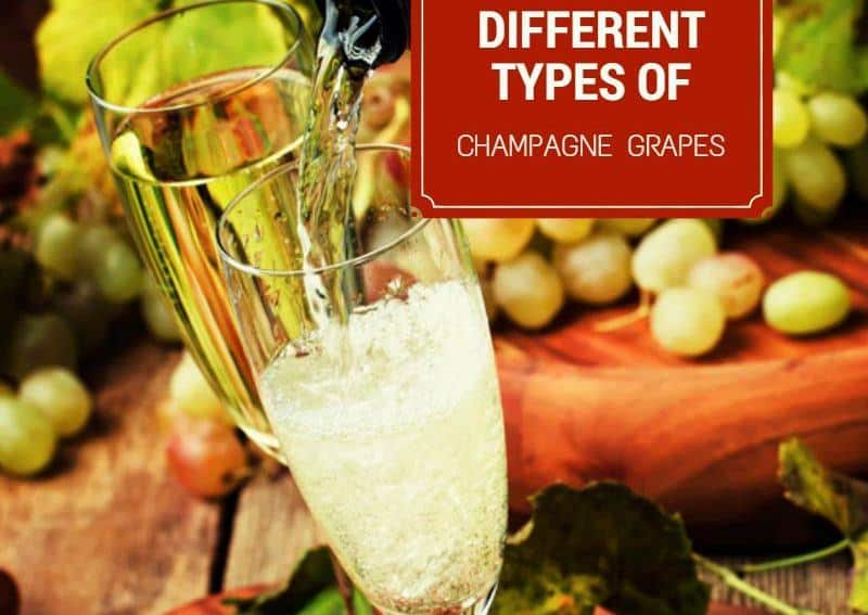 Different types of champagne grapes