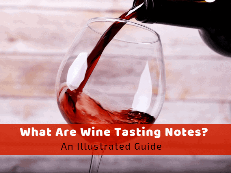 What Are Wine Tasting Notes? An Illustrated Guide