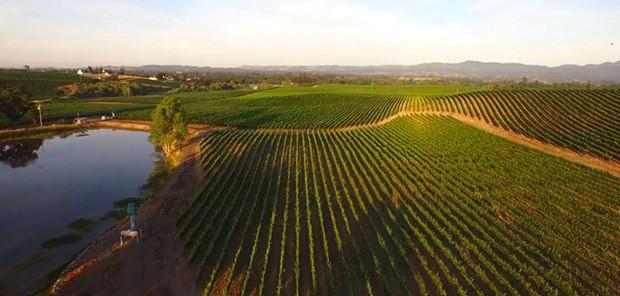 Gallo Winery