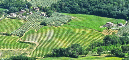 Vineyards-near-the-city-of-Montepulciano