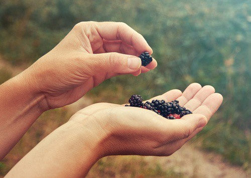 holding-blackberries-for-wine